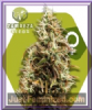 Zambeza Choc Candy Female 10 Marijuana Seeds
